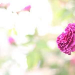 あなたは世界に、たったひとつだけの花